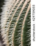 echinocactus grusonii  plant in ...   Shutterstock . vector #429759055