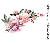bouquet of peony flowers.... | Shutterstock . vector #429788836