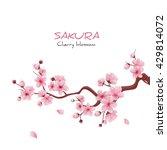 vector illustration sakura... | Shutterstock .eps vector #429814072