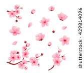 vector illustration sakura... | Shutterstock .eps vector #429814096