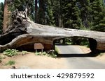 Sequoia National Park's Fallen...