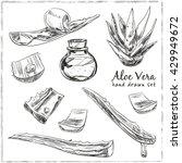 aloe vera hand drawn set.... | Shutterstock .eps vector #429949672