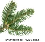 Small photo of Abies lasiocarpa on white background