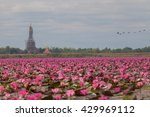 red lotus  thailand  lotus  red ... | Shutterstock . vector #429969112