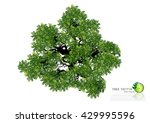 trees top view for landscape... | Shutterstock .eps vector #429995596