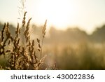 meadow at dawn with mist and... | Shutterstock . vector #430022836
