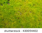 Thick Layer Of A Green Moss An...