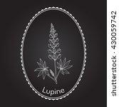 Lupine  Lupinus Perennis   Or...