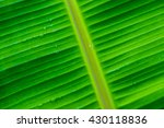 Banana Leaf Background In...