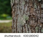 the bark of broad leaf mahogany   Shutterstock . vector #430180042