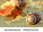beautiful seashells on the... | Shutterstock . vector #430253152