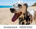 Cute and happy dalmatian dog on ...