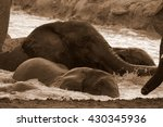 African Elephant's Splashing...