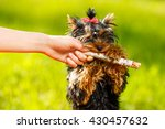 man pulling stick from dog  ... | Shutterstock . vector #430457632