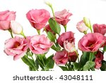 pink flowers | Shutterstock . vector #43048111