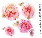 pink blossom peonies. colorful...   Shutterstock . vector #430510822