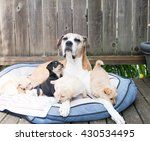 small one month old puppies... | Shutterstock . vector #430534495