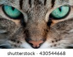 A Cat With Green Eyes Close Up
