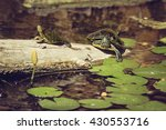 Two Turtle In The Water  In Th...