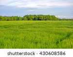green wheat field and cloudy sky | Shutterstock . vector #430608586