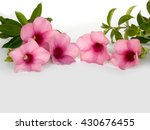 beautiful pink flower  ... | Shutterstock . vector #430676455