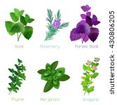herbs and spices  collection of ... | Shutterstock .eps vector #430806205