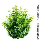 Small photo of green bush isolated on white background.