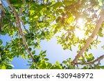 Figs Tree.fig Shadding.fig...