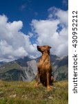 Small photo of Young purebred red German Pinscher sitting attentively in the breathtakingly beautiful alpine landscape of the Hohe Tauern region of Tirol, Austria.