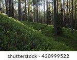 European Forest Floor Covered...