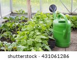 growing vegetables in a... | Shutterstock . vector #431061286
