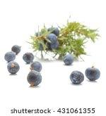 juniper berries isolated on...   Shutterstock . vector #431061355