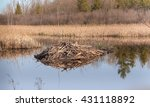 Beaver Lodge With Goose