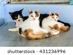 Three Cat Father Mother And...