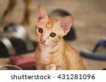 a cat   Shutterstock . vector #431281096