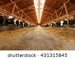 Herd Of Young Cows In Cowshed.
