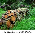 A Pile Of Wood Logs In The...