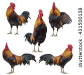 rooster collection set isolated ... | Shutterstock . vector #431500138
