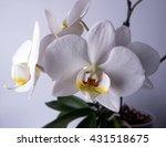 orchid flower   Shutterstock . vector #431518675