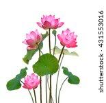 Lotus Flower On White...