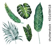 split leaves  palm  banana... | Shutterstock . vector #431658418