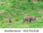 elephants in thailand. | Shutterstock . vector #431701318
