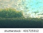 blurred water bokeh in the... | Shutterstock . vector #431725312