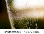 morning dew. shining water... | Shutterstock . vector #431727508