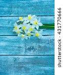 Flower. Daffodil. Spring...