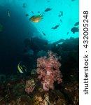 coral | Shutterstock . vector #432005248