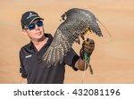 Close Up Of A Peregrine Falcon...