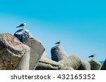 Small photo of Three seagulls alighted ascending on a bay concrete tetra-pods