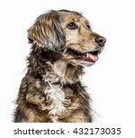 Close Up Of A Crossbreed Dog...