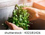 man's hands washing parsley....   Shutterstock . vector #432181426